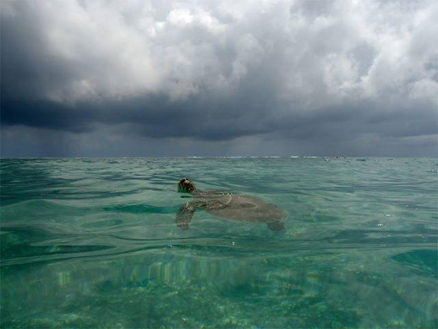 Tortuga marina, Akumal, Mexico