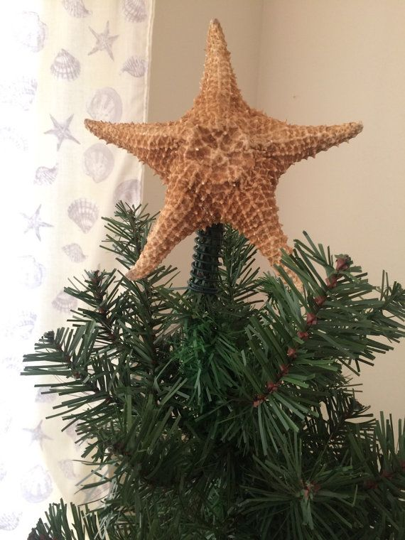 Caribbean starfish tree topper will really make your tree stand out! This size is a good fit for 5 foot and higher trees.  Stable spring will slip over the top of the tree with ease. Spring is finished in green to match your Christmas tree. Tree toppers are made to order and sizes will vary approx. 6 inches.  Toppers are finished with an acrylic sealant to protect and prolong the life of the starfish. Glitter is also available as a finish (shown in 3rd photo).  **If you require a different…