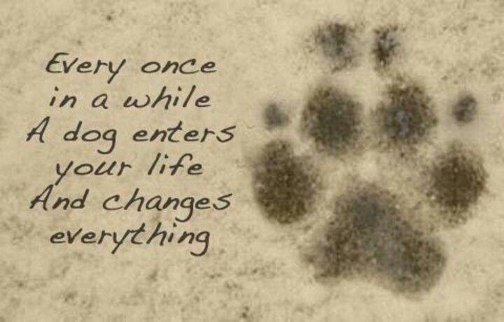 True !!!dog quote