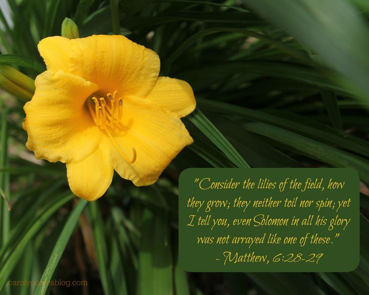 consider the lilies of the field | Consider the lilies of the field, how they grow; they neither toil ...
