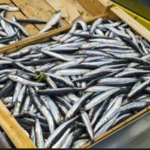 Offerte lavoro Genova  Pesca eccezionale con oltre 5.000 casse sbarcate a Sestri Levante  #Liguria #Genova #operatori #animatori #rappresentanti #tecnico #informatico Le acciughe del mar Ligure vendute anche sulla riviera romagnola