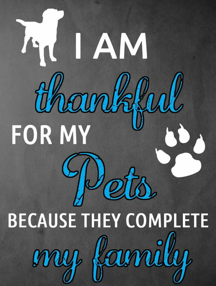 I am thankful for my pets because they complete my family