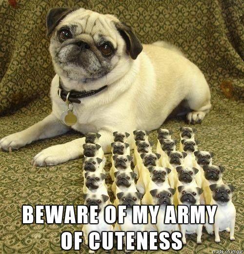 Commander Pug Readies His Forces - Pug Meme, funny cute pugs