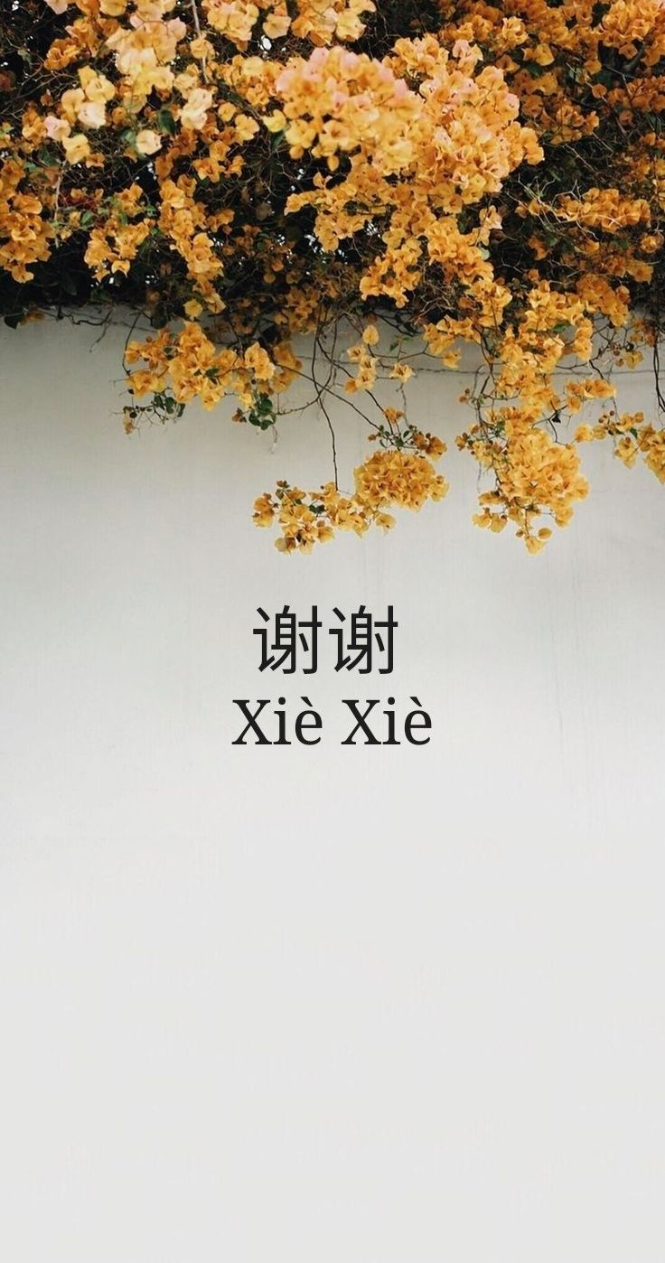 xie xie thank you terima kasih in china alika rahma | wallpapers in