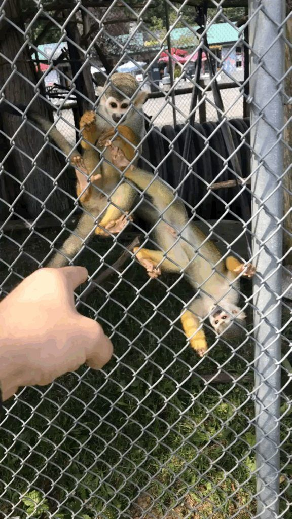 Monkey at the local zoo wanted to hold hands http://ift.tt/2s1zqbS