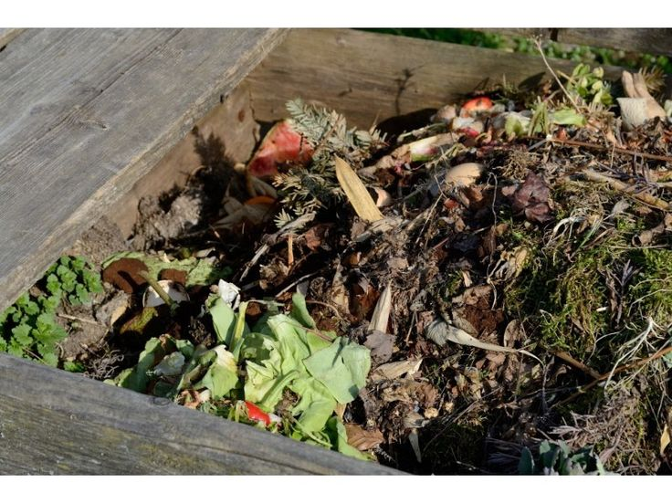 649 best composting images on pinterest growing vegetables blouse and colors