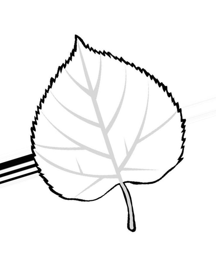 Листья тополя раскраска для детей распечатать