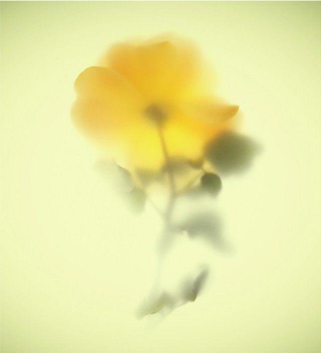 JANNELLI & VOLPI – WONDER WALLPAPER  amber queen by Massimo Gardone