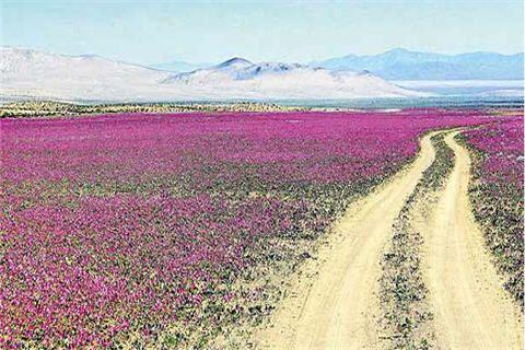Norte Chico // En esta zona se ubica el desierto de atacama y se puede observar el fenómeno el Desierto Florido, un espectáculo multicolor del norte de Chile. Gracias a sus cielos despejados, se ubican aquí importantes observatorios astronómicos. Se ubica también el Valle del Elqui y las ciudades de Copiapó y La Serena