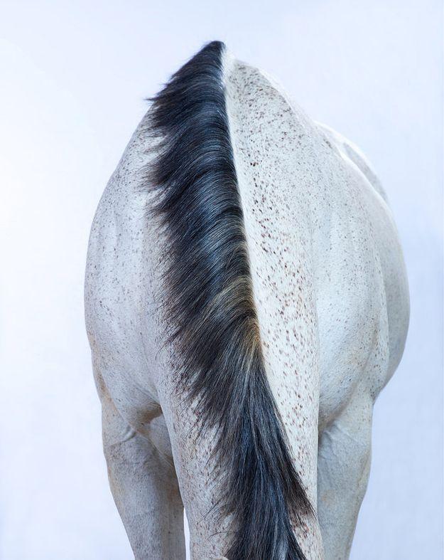 HorseBlack Hair, Fine Art Photography, White Horses, Horses Photography, Hors Photos, Andrew Mcgibbon, Hors Photography, Animal, Wild Horses