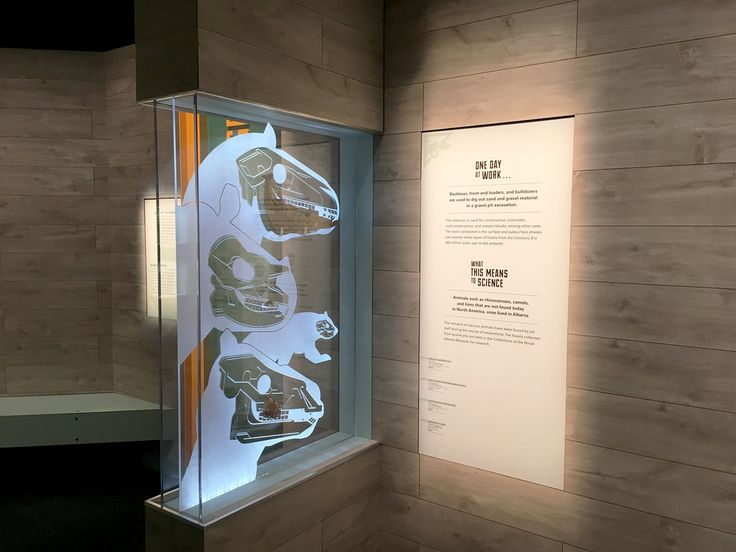 Mammal Jaw Display