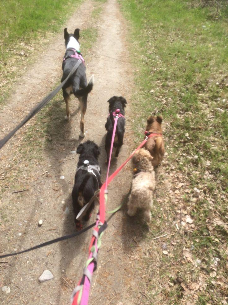 Ut på tur igjen - On a walk again