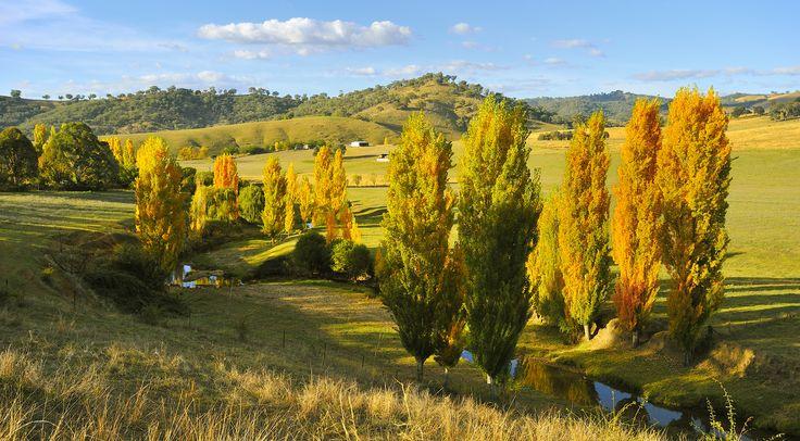 Countryside outside Adelong NSW