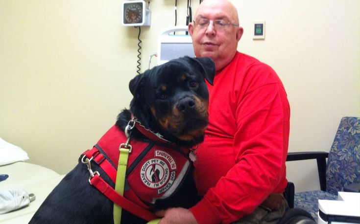 Rottweiler Leads Disabled Vietnam Vet To Washington
