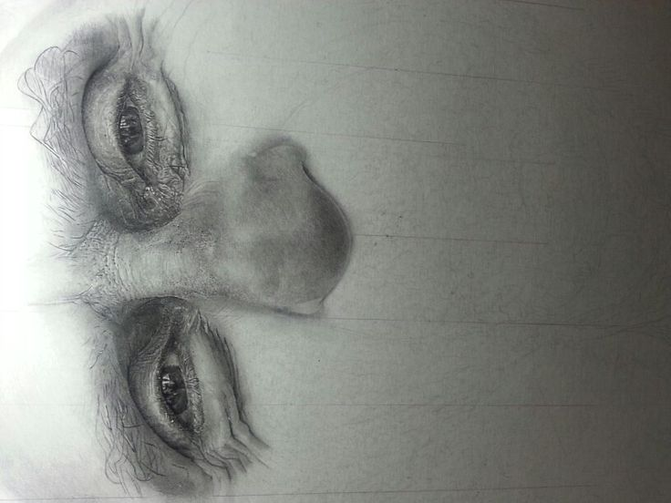 I have started on my first hyperrealistic drawing !:D