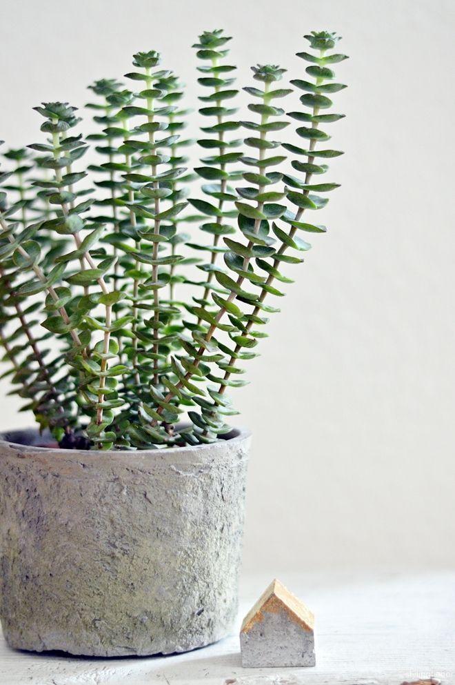 stylingfieber...: Urban Jungle Bloggers   Plants and Flowers...