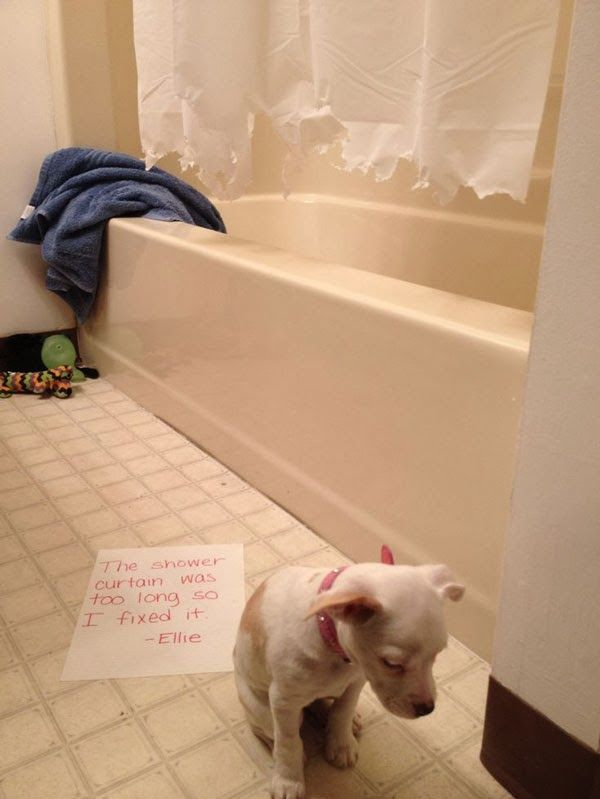 Dog shaming! The shower curtain was too long, so I fixed it.