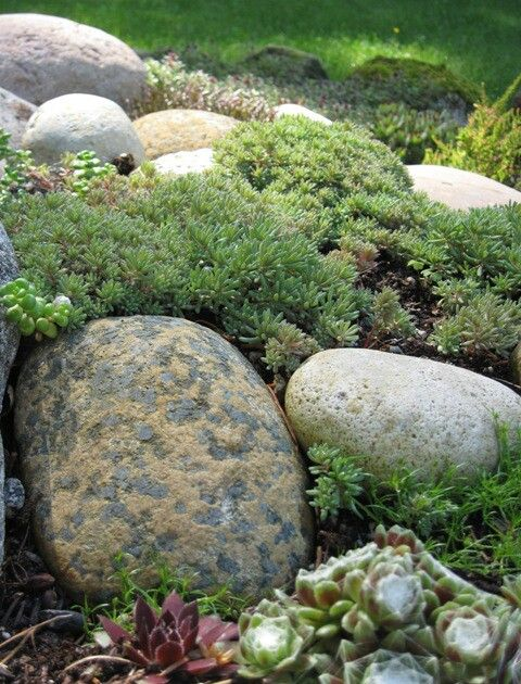 156 Best Images About Rock Gardens On Pinterest | Gardens