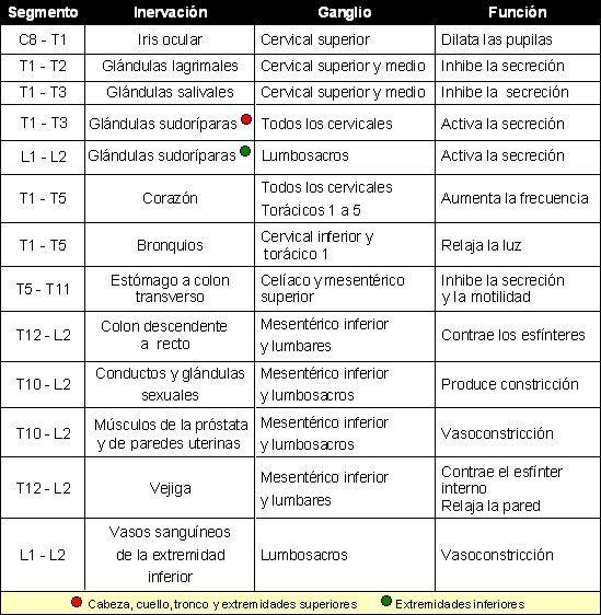 CIENCIAS BIOLOGICAS: ANATOMIA Y FISIOLOGIA DEL SISTEMA NERVIOSO AUTONOMO