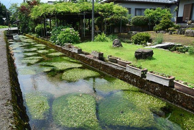 梅花藻 - Google 検索