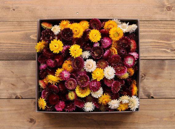 Strohblumen Trockenblumen mischen Sie getrocknete von Camellious