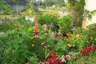 Florida Backyard Butterflies Garden | Butterfly garden ...