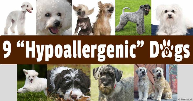 Maltese, poodle, and Bichon Frise are some dog breeds that are considered hypoallergenic, making them more suitable for dog lovers with allergies. http://healthypets.mercola.com/sites/healthypets/archive/2014/05/30/hypoallergenic-dogs.aspx