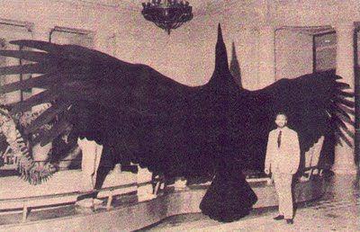 Mark Turner's Mysterious World: Monster of the Skies! Thunderbird - Legends…