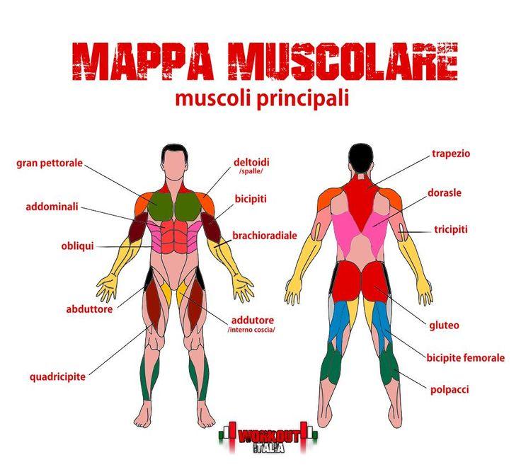Dare un nome ai propri muscoli con la nostra mappa muscolare. Scopri tutti i muscoli del corpo umano e impara i nomi delle fasce muscolari che alleni.