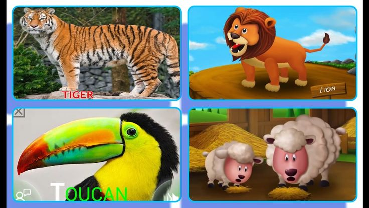 Compilation Animals Names and Sounds for Children  | Full Animals Sound ...