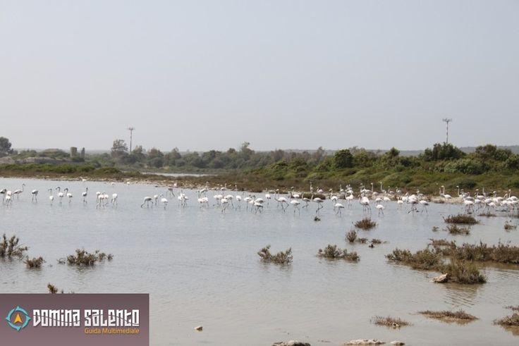 Flamingos at Salina dei Monaci's reserve - Torre Colimena, TA, Italia - DominaSalento.it