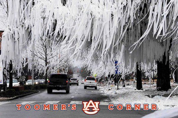 Toomer's Corner on the morning after winning the BCS national Championship