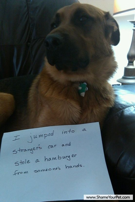 love dog shaming! :P