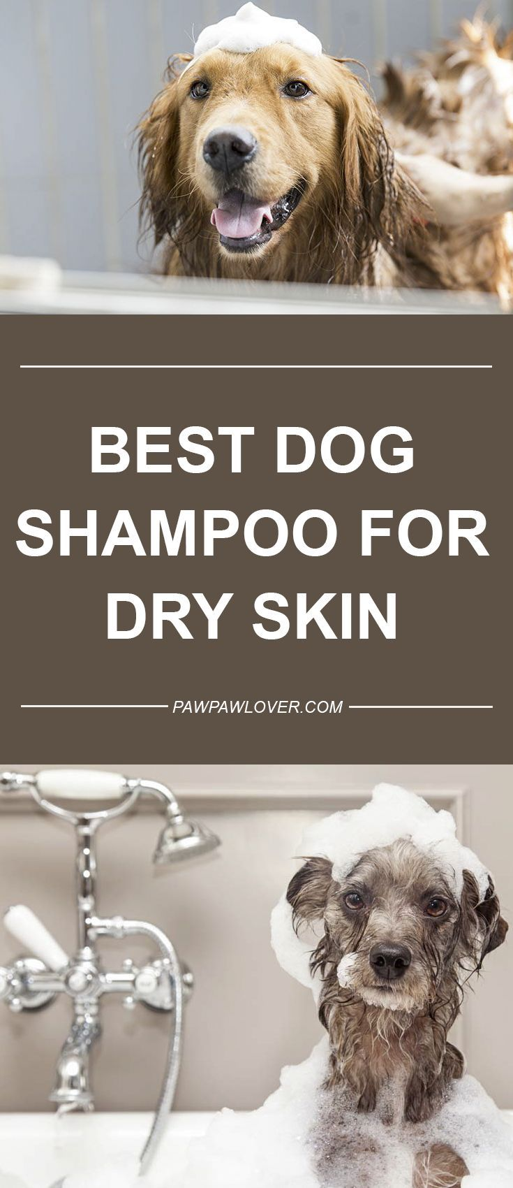 Pin By Andrewcurtis On Doggies Best Dog Shampoo Dog Shampoo Diy Dog Shampoo