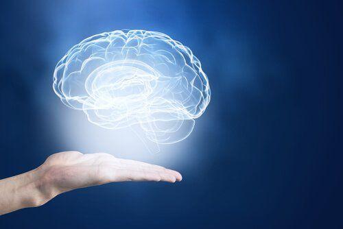 Nuestro cerebro tiene alrededor de cien mil millones de neuronas, que forman entre ellas una red de gran complejidad. Tu memoria tiene potencial.