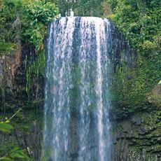 Things To Do in Cairns | Millaa Millaa Falls | Rydges Esplanade Cairns Resort