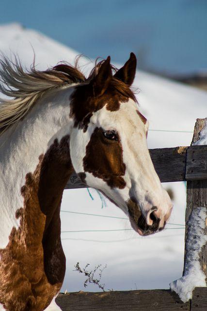 Paint Horse,