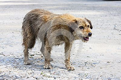 Abandoned dog begging for food.