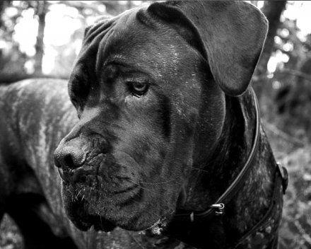 Adopsjon & Omplassering — Hundehjelpen.net