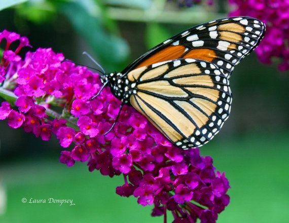 Jardin des papillons photographie Nature par WildFeatherStudio