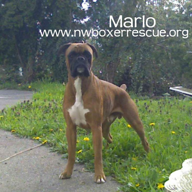 Marlo has been adopted by the Eader family! Congrats Marlo & Thanks for rescuing.