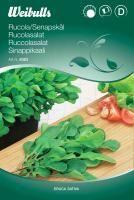 Eruca sativa  -Ruccolasalat