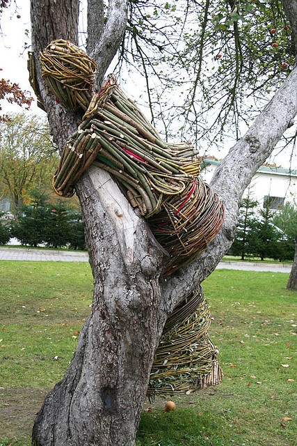 """Follow the link to lots of """"tree huggers.""""  I want one too.    A Dream of an Old Apple Tree - The Spring Fairy    TreeHugger installation for International Tree Day in the cities of Warsaw, Zabrowo, and Wilkowice, Poland."""