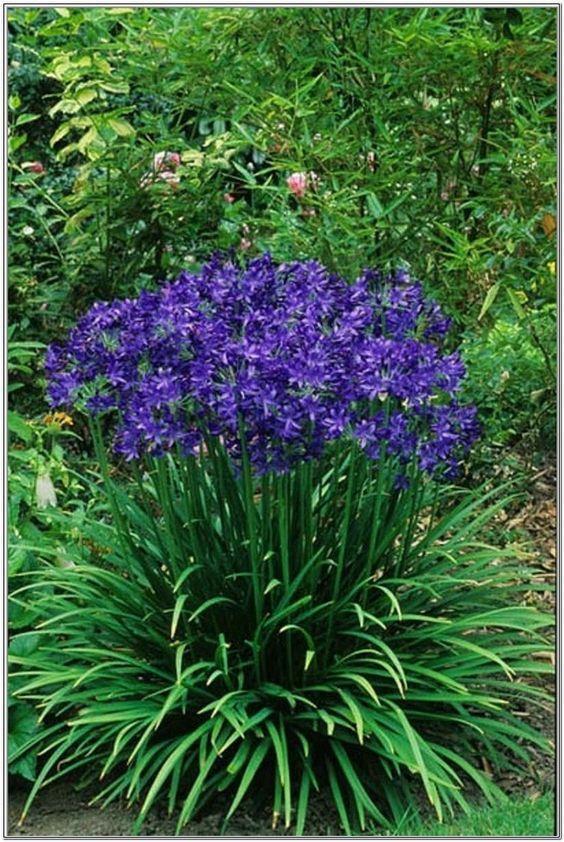 Gartentipps und Pflanzen – Casey DeVos🌟 – Diy