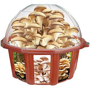 Grow your own mushrooms with this fun and easy kit. And then eat your own mushrooms. And then grow some more!