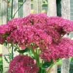 Full Sun Plants – Plants And Flowers That Do Well In Direct Sun