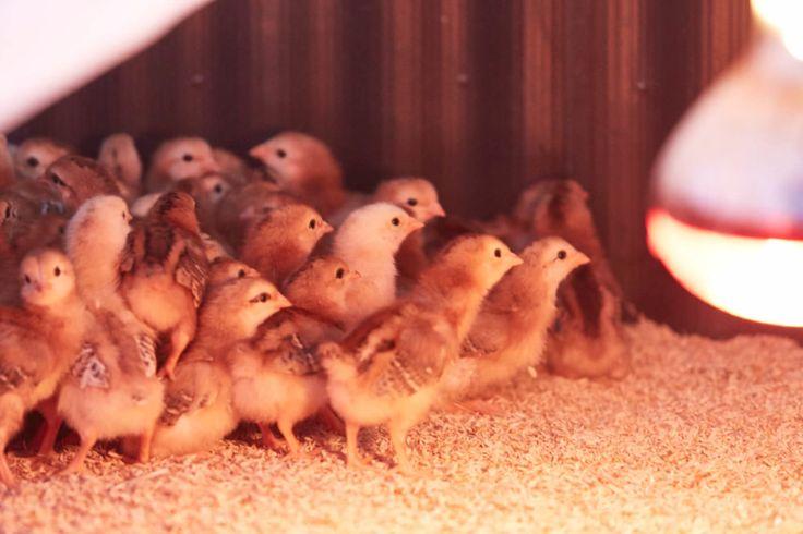 比内地鶏応援隊が比内地鶏のふるさと秋田県を初訪問! | 比内地鶏のおウチごはん。
