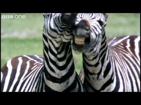 Funny Talking Animals - Walk On The Wild Side - Series 2 Episode 1 preview - BBC One