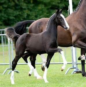 hackney horses - Bing Images