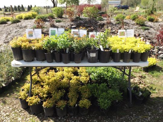 How to Make Money by Growing and Selling Plants